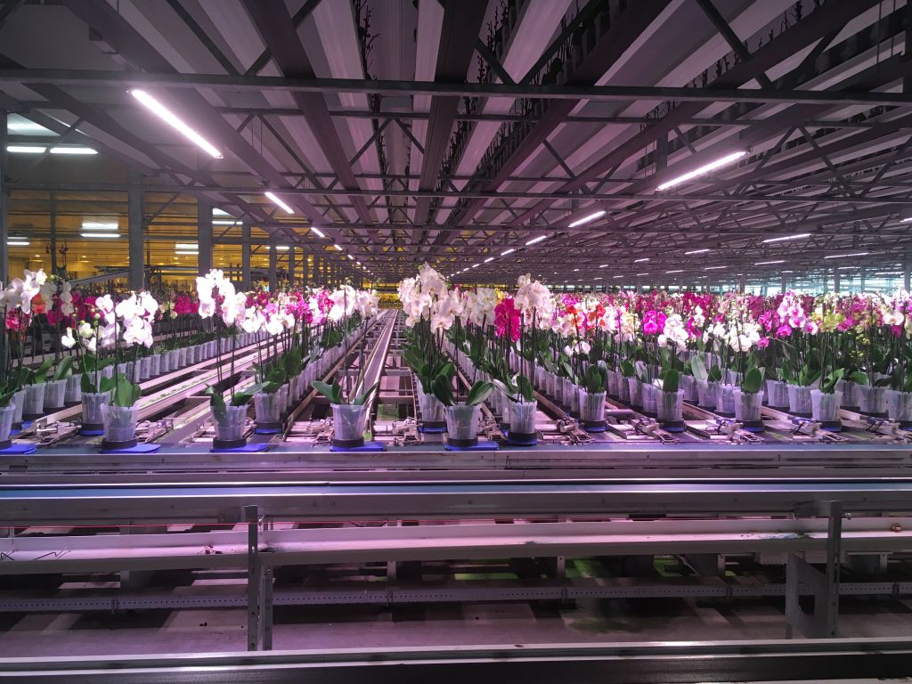 Horticulture has been subject to the same patterns of economic and spatial transformation. To remain competitive on a global market, greenhouses grow in scale, and consequently gradually automate manual labour.    